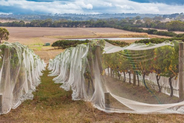 Pest Control Nets - Australia